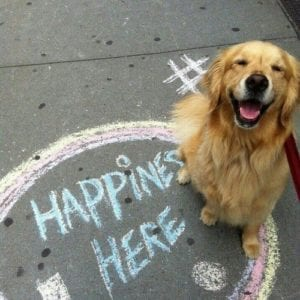 3 First Steps to a Life of Happiness