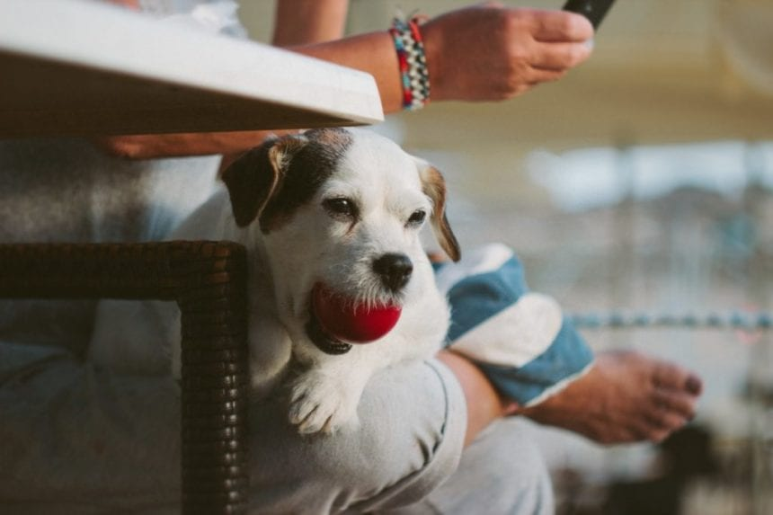 How & Why To Watch Your Pet