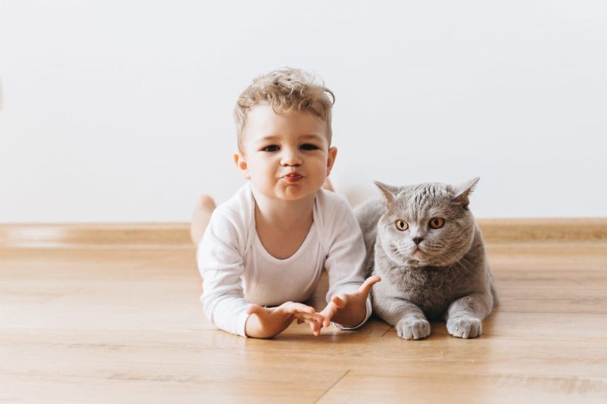 Are Cats Safe to Have Around Children